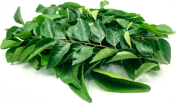 CURRY LEAVES/ GOD LIMB