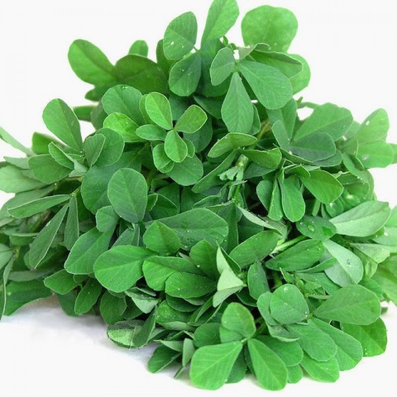 FENUGREEK (GREEN)/ METHI