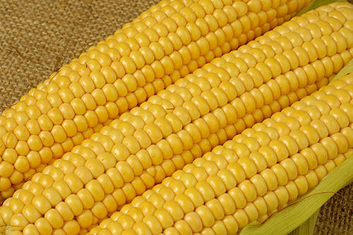 MAIZE (CORN)/ MAKA